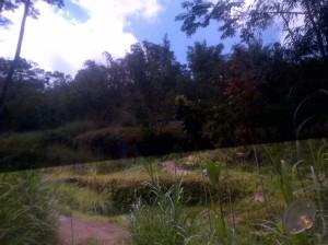 The grass..